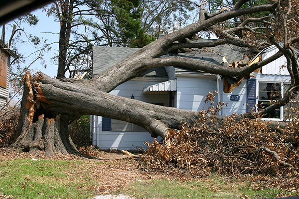A tree has fallen on a home and damaged a roof following a storm.